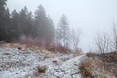 Coniferous forest in winter fog — Stock Photo
