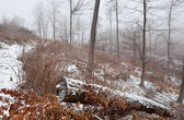 Winter foggy day in forest — Stock Photo