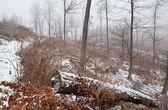 Nebeligen wintertag im wald — Stockfoto