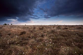 Clouded sky over marsh with cotton-grass — Stock Photo