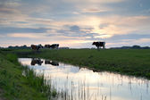 Sunset over pasture with cows by river — Stock Photo