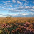 Gold morning sunshine over marsh with heather — Stock Photo #39922105
