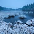 Frosty winter morning over swamp — Stock Photo