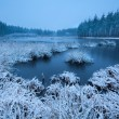 Stock Photo: Frosty winter morning over swamp