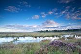 Ciel bleu au-dessus des marais avec heather — Photo