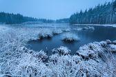 Frosty winter morning over swamp — Stok fotoğraf