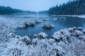 Cold winter morning over wild lake — Stock Photo