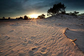 Gold sunshine over sand dunes — Foto Stock