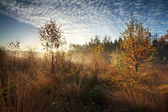 Gold morning sunshine over misty marsh with trees — Stock Photo