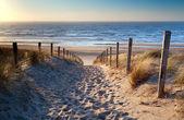 Path to North sea beach in gold sunshine — Stock Photo