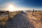 Sand path to North sea beach — Stock Photo