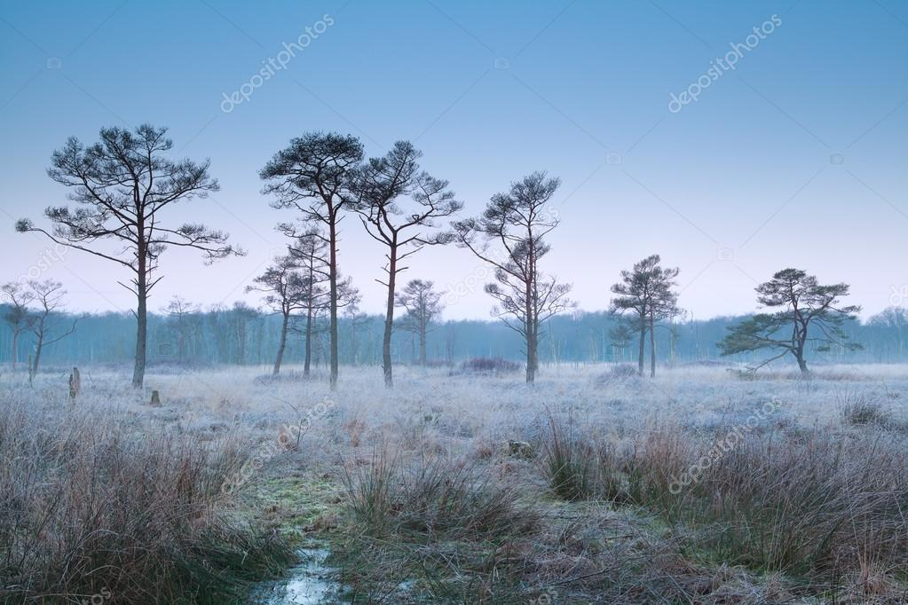 Frosty Morning, Trees And Fog. Stock Photo - Image: 91725648