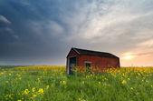 Sunset behind farmhouse on rapeseed field — Stock Photo