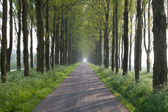 Sunny way in tree tunnel — Stock Photo