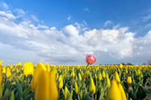 One pink tulip on yellow field — ストック写真
