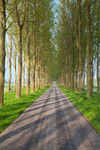 Tunnel road between tree rows — Stock Photo