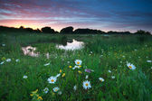 Pink summer sunset over chamomile meadow by lake — ストック写真
