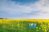 Rapeseed flowers and beehive over blue sky — Stockfoto