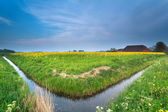River and rapeseed flowers on Dutch farmland — Stockfoto