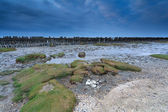 Low tide on North sea in Friesland — Stock Photo