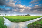 Beautiful Dutch farmland with blue sky — Stock Photo