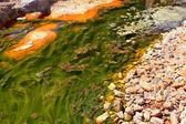 Green alga in acidic river — Stock Photo