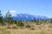 Young forest and view on Alps — Stockfoto