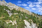 Coniferous forest on rocky mountain — Stockfoto