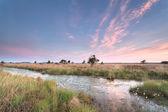Sunrise on marshes and swamp — Stockfoto