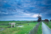 Morning sky over Dutch farm with windmill and goat — Stock Photo