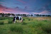 Wypas konia na pastwisku w zachód słońca — Zdjęcie stockowe