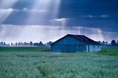 Sunbeams over wooden hut on field — Stock Photo