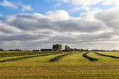 Green fresh hay on Dutch farmland — Stock Photo