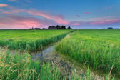 Summer sunset over Dutch farmland — Stock Photo
