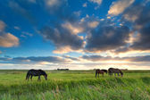 Horses grazing on pasture at sunset — Stock Photo