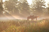 Horses on pasture in dense fog — Stock Photo