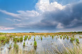 Rain clouds over swamp — Stock Photo