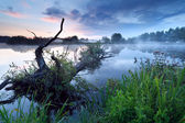 Misty sunrise on river with old tree in water — Stock Photo