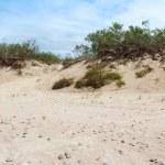 Dunes — Stock Photo #27072043