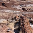 Stock Photo: Petrify forest