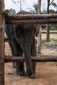 Small child elephant — Stock Photo