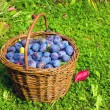 Plums in a wicker basket — Stock Photo