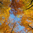 Stock Photo: Autumnal forest