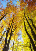 Autumnal trees — Stock Photo
