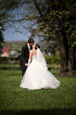 Newly married couple kissing on grass under big tree — Stock Photo