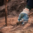 Hands in gloves planting small tree sprout in soil — Stock Photo