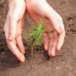 Hands covering sprout of new tree in soil — Stock Photo