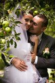 Retrato de novio guapo besos a novia bajo manzano — Foto de Stock