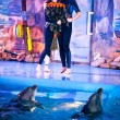 Dolphins looking at kissing couple at dolphinarium — 图库照片