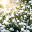 Photo of fir covered in snow against shining sun — Stock Photo
